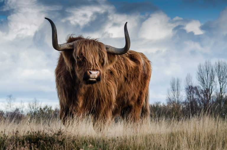 What are the Bulls of Bashan? – 4 Views Explained
